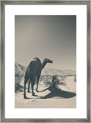 In The Hot Desert Sun Framed Print