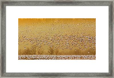 In The Magic Golden Would Framed Print