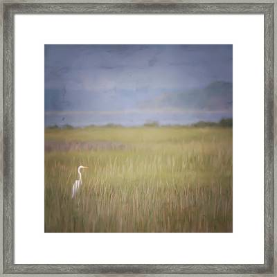 Framed Print featuring the photograph In The Marsh  by Kerri Farley