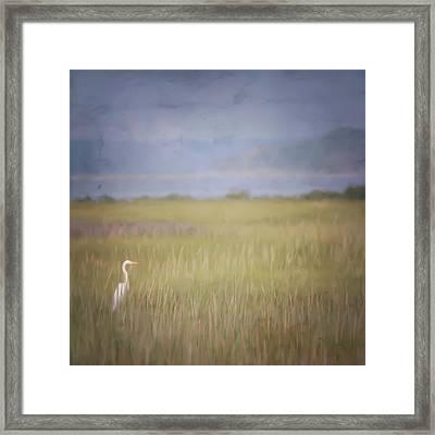 In The Marsh  Framed Print by Kerri Farley