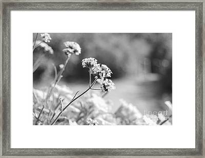 In The Meadow Framed Print by Barbara Bardzik