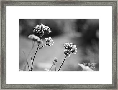 In The Meadow II Framed Print by Barbara Bardzik