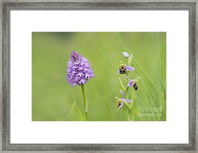 In The Meadow  Framed Print by Tim Gainey