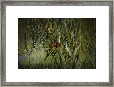 in the memory of Papillon Framed Print