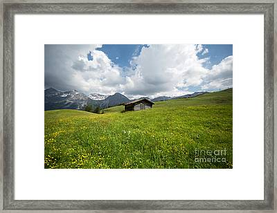 In The Middle Of Green Framed Print
