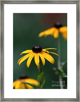 In The Middle Framed Print by Sabrina L Ryan