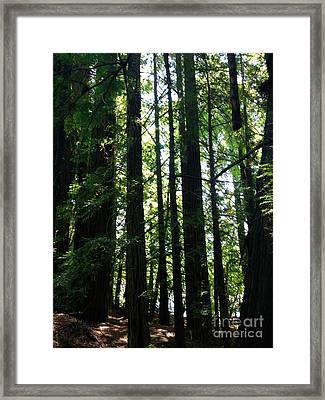 In The Midst Of Giants Framed Print by Michelle Bentham