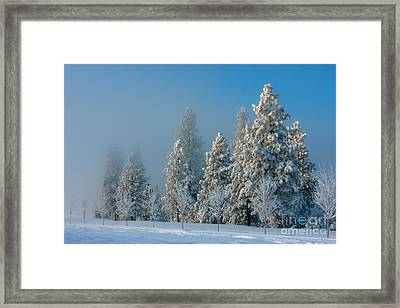 In The Moment Framed Print by Beve Brown-Clark Photography