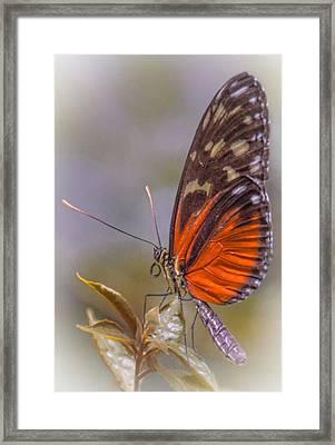 In The Morning Framed Print by Jill Balsam