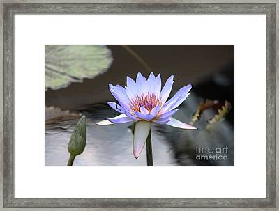 In The Morning Light Framed Print by Yvonne Wright