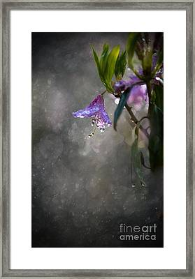 In The Morning Rain Framed Print by Jaroslaw Blaminsky