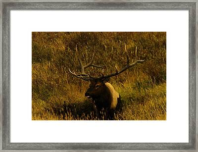 In The Mudhole Framed Print by Jeff Swan
