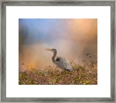 In The Nest - Great Blue Heron Framed Print