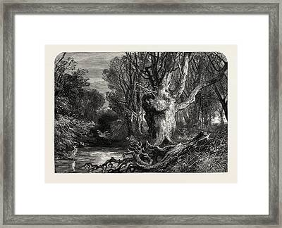 In The New Forest, Lymington, Uk, Great Britain Framed Print