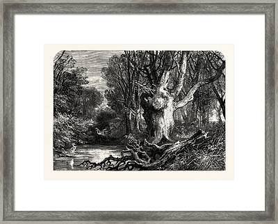 In The New Forest, Near Lymington, Uk, Britain Framed Print