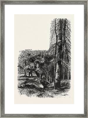 In The New Forest, Near Lyndhurst, The Forest Scenery Framed Print