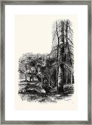 In The New Forest, Near Lyndhurst, Uk, Britain Framed Print