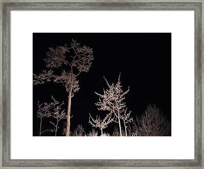 Framed Print featuring the photograph In The Night Garden by Brian Boyle