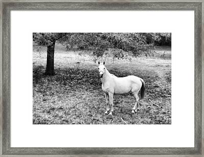 In The Open  Framed Print by Steven  Taylor