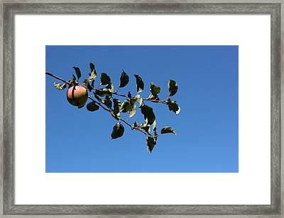 In The Orchard Framed Print by Mary Bedy