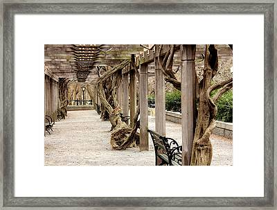 In The Park  Framed Print by Mark Ashkenazi