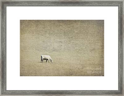 In The Pasture Framed Print by Elena Nosyreva