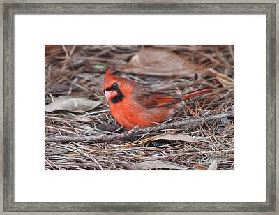 In The Pine Needles And Leaves Framed Print
