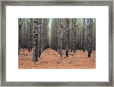 In The Pines Framed Print by Bob Jackson