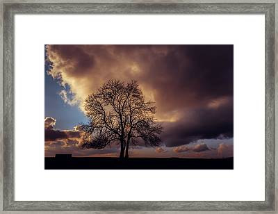 In The Pink Framed Print by Chris Fletcher