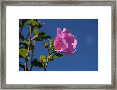 In The Pink Framed Print by Christine Nunes
