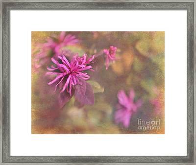 In The Pink Framed Print by Judi Bagwell