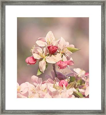 In The Pink Framed Print by Kim Hojnacki