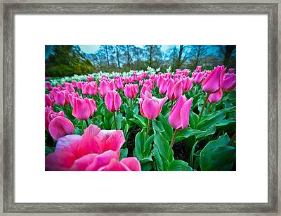 In The Pink Framed Print by Kristopher Schoenleber
