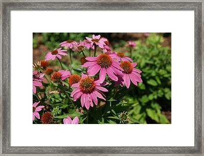 In The Pink Framed Print by Leigh Ann Hartsfield