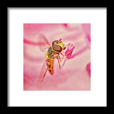 Hoverfly Framed Prints