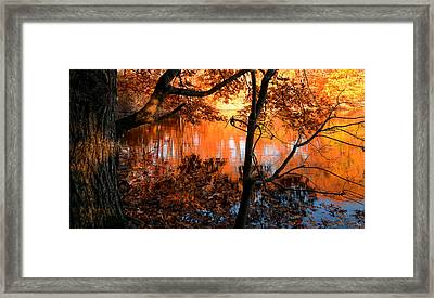 In The Pond Framed Print