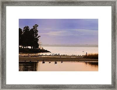 In The Quiet Morning Framed Print by Bill Cannon