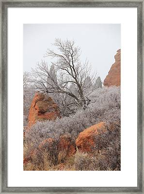 In The Quiet Of The Fog 4 Framed Print by Diane Alexander