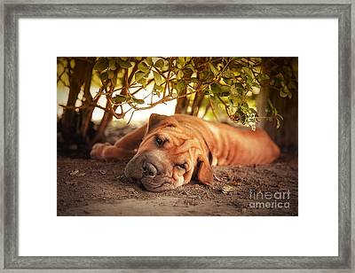 In The Shade Framed Print by Jane Rix