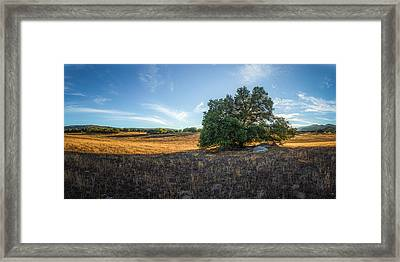 In The Shade Of An Oak Framed Print