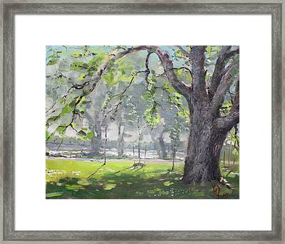 In The Shade Of The Big Tree Framed Print by Ylli Haruni