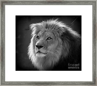 In The Shadows #2 Framed Print