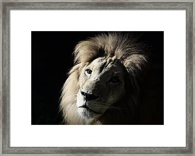 In The Shadows Framed Print by Lisa L Silva