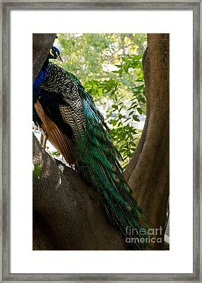 In The Shadows Framed Print by Peggy Hughes