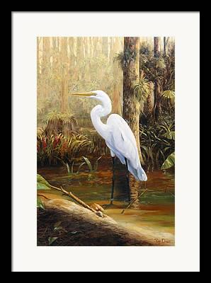 Great Egrets Framed Prints