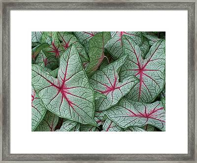 In The Shape Of A Heart Framed Print by Steve Huang