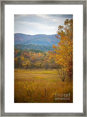 In The Smokies Framed Print by Lena Auxier