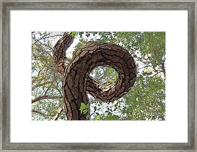 In The Spiral Of Life Always Reach For The Sky Framed Print by Kenny Sampson