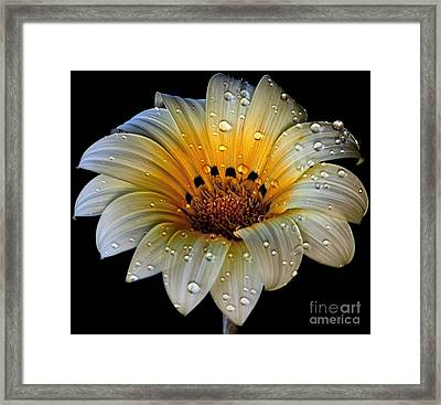 In The Spotlight Framed Print by Shirley Mangini