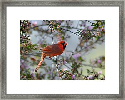 In The Spring Framed Print